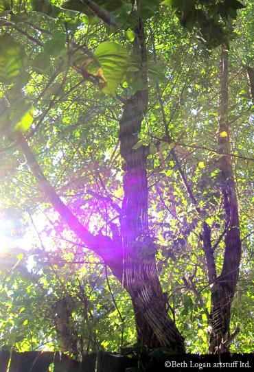 Spiderweb-in-sun