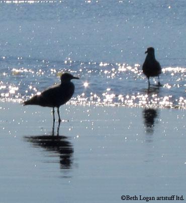 Ocean-shores-gulls1