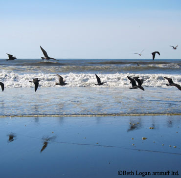 Ocean-shores-gulls2