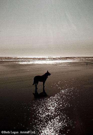 Molly-beach-3