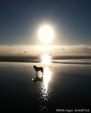 Molly-beach-2