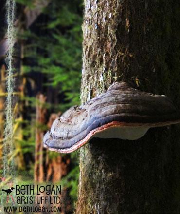 HT&L-fungus