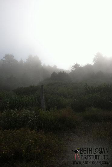 Bright-foggy-morning