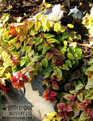 Red-n-green-leaves