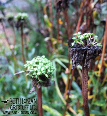 December-garden02