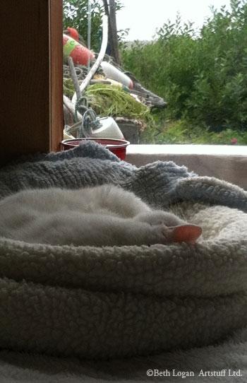 Lulled-to-sleep