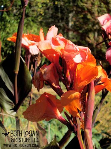 October-blooms1