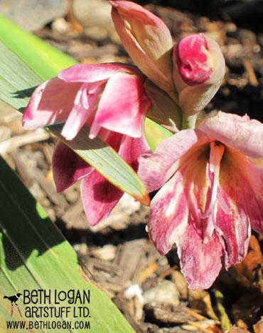 October-blooms2