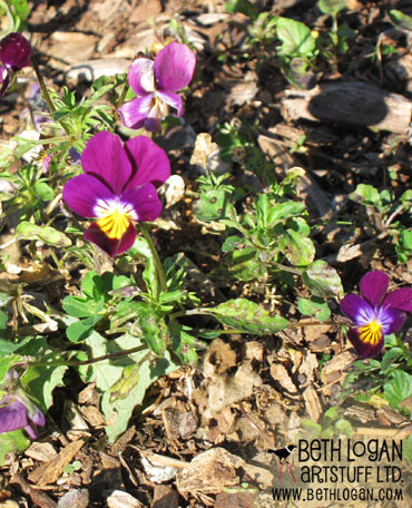 October-pansies