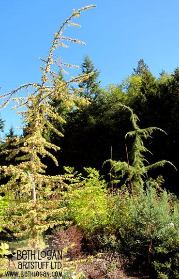 Seussian-trees