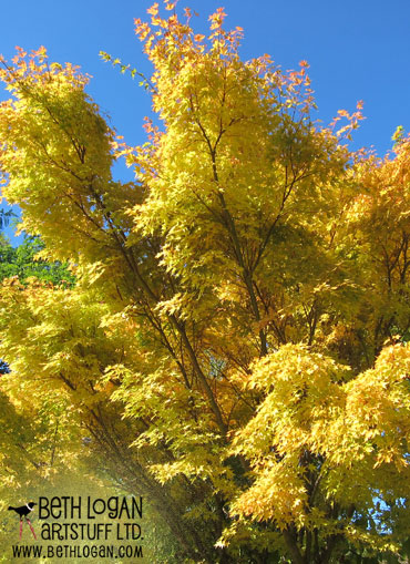 Golden-maple