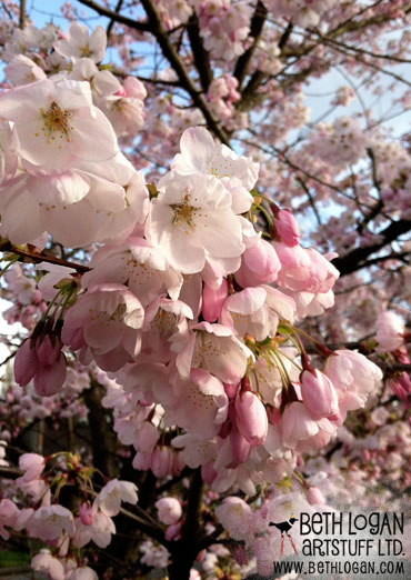 Pink-tree-2