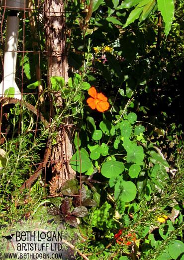 Late-summer-garden3