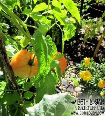 Late-summer-garden1