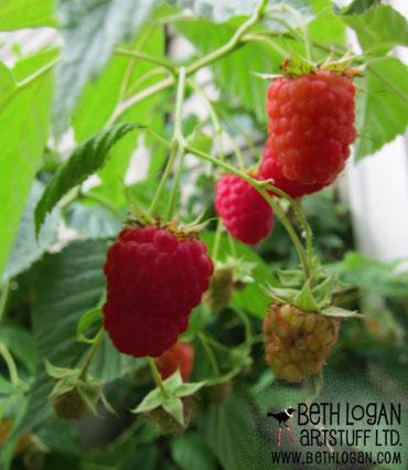 Raspberries0