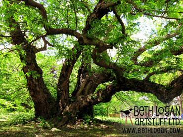 BBG-my-tree2