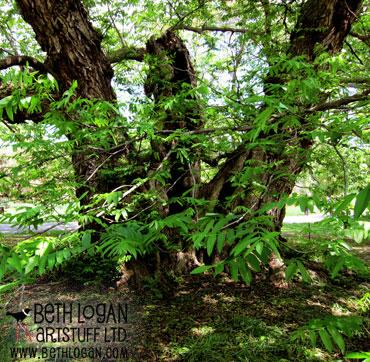 BBG-my-tree3