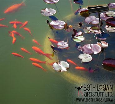 BBG-goldfish