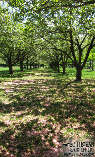 BBG-cherry-trees