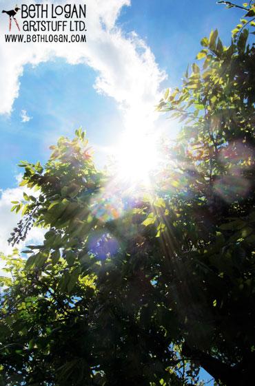BBG-wisteria4