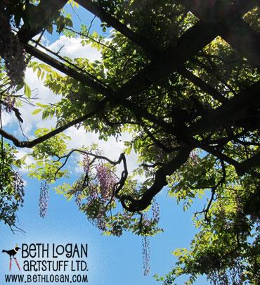 BBG-wisteria5
