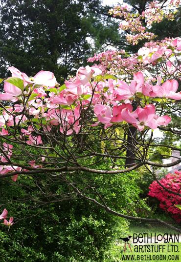 Sue-zipkin-pink-dogwood