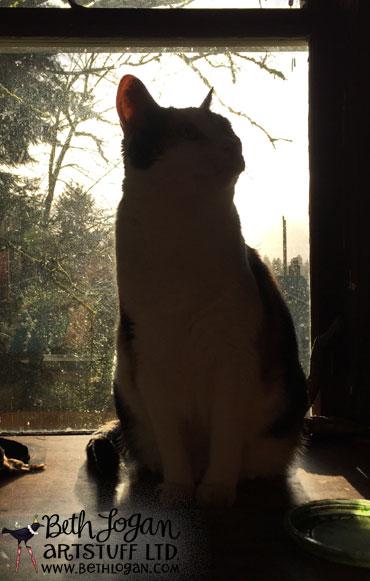 Studiocats01