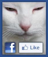Flossie's World on Facebook